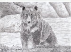 a-urs-carbune